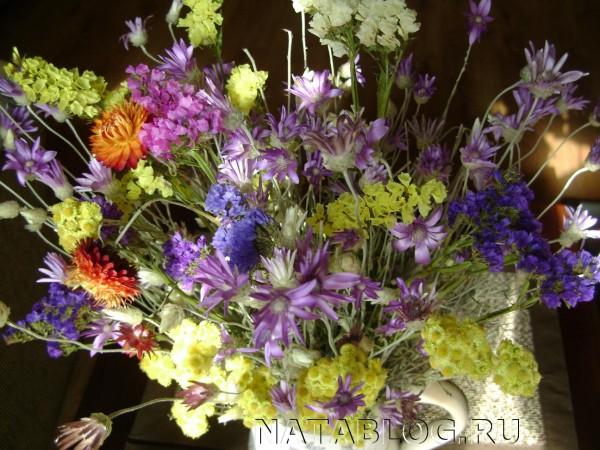 сухоцветы крупным планом