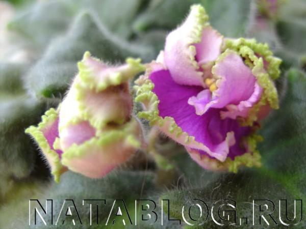 Цветок в увеличении