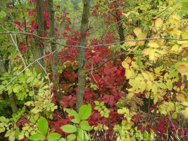 Красные и желтые листья