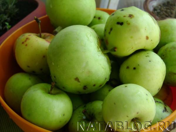 Яблоки для пастилы