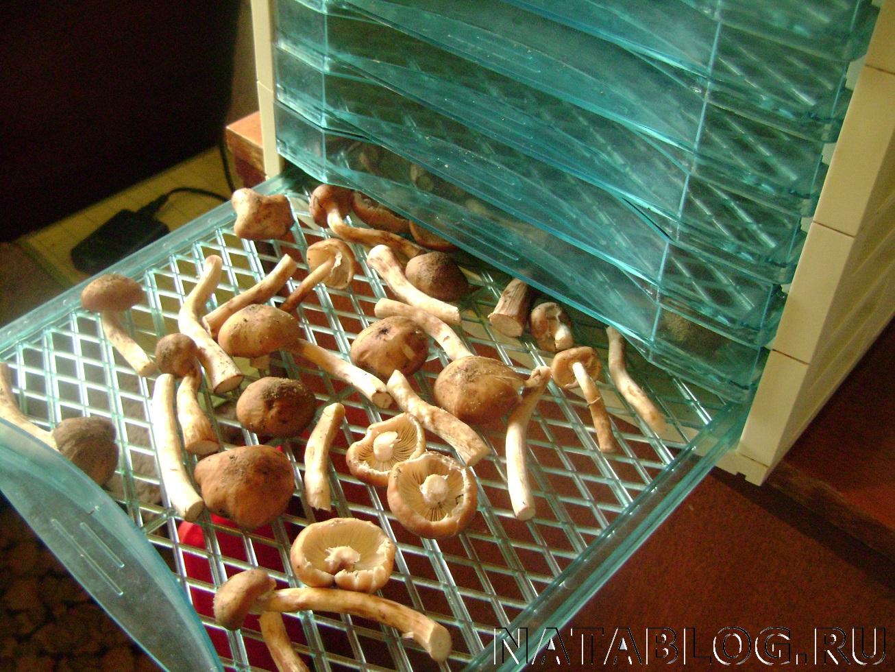 Выращивание опят: пошаговая инструкция. Как выращивать 78