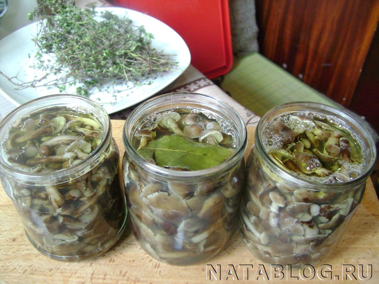 Соление опят в домашних условиях рецепты